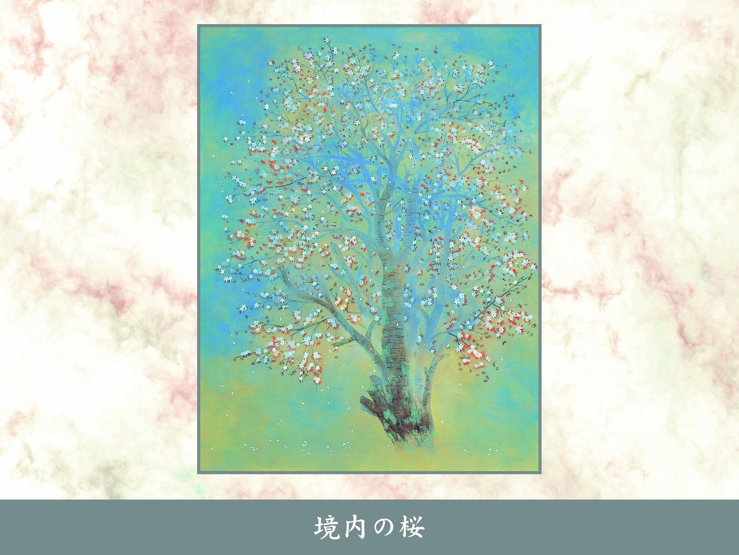 境内の桜80号
